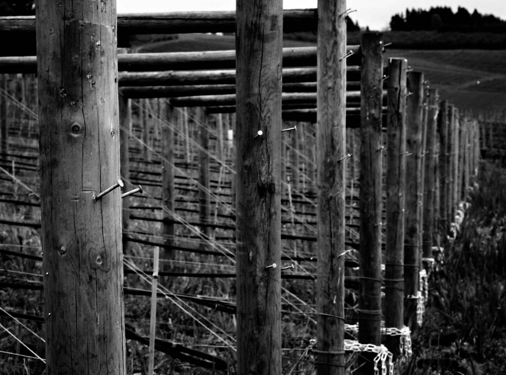 Backroads Wine Tours